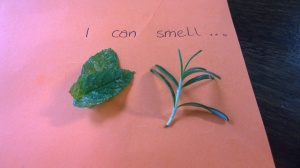 Mint and Rosemary